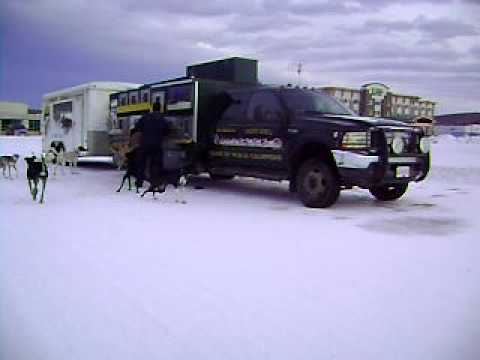Streeper Kennels- Loose drop- 2009- Fairbanks Alaska