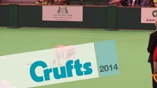 Obreedience | Set Exercise | Team Spanish Water Dog | Crufts 2014