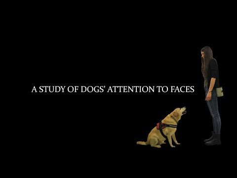 A Study of Dogs' Attention to Faces