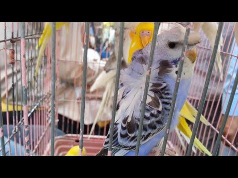 Sunday Bird Market Lalukhet Karachi | Video in URDU/HINDI - Karachi