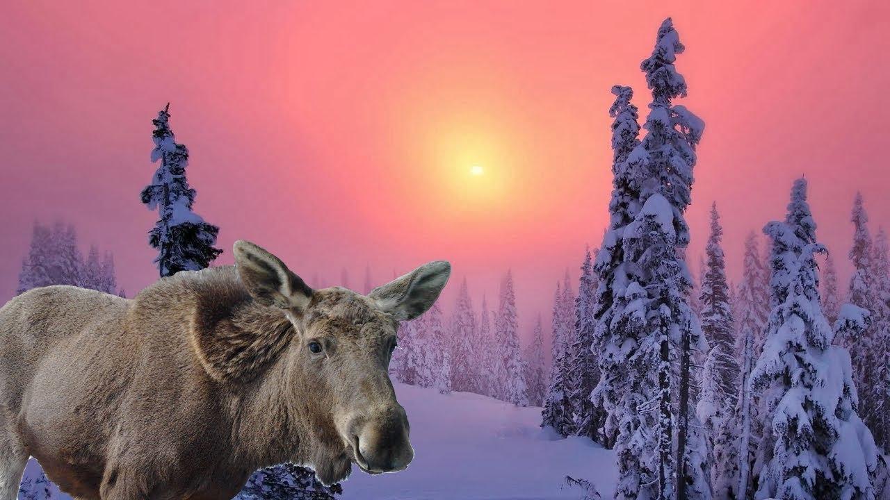 24 ЧАСА В ЛЕСУ один зимой в Горной Шории