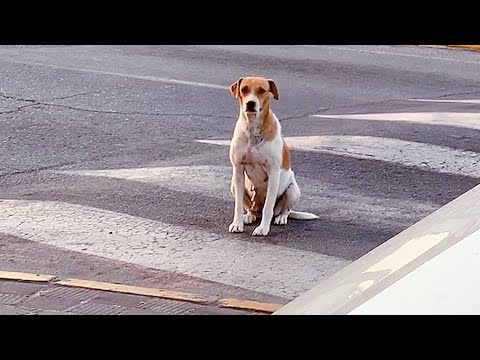 Loyal dog abandoned by her owners waited for them but they never came back