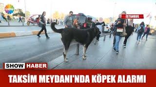 Taksim Meydanı'nda köpek alarmı