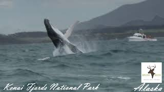 Download Mp3 Alaska 11 Day/10 Night Ocean Wildlife To Interior Wilderness Adventure