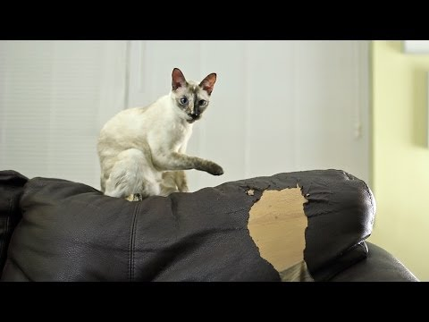 Cat Wrecking Ball - N2 the Talking Cat S3 Ep8