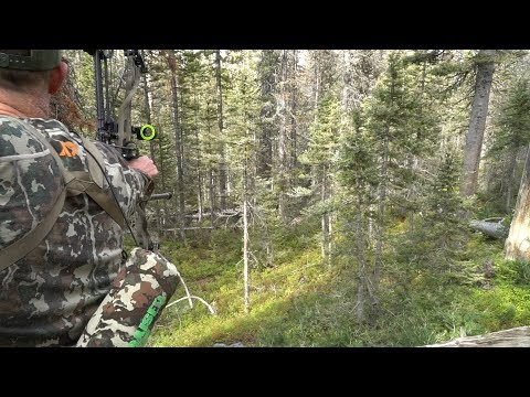CALLING IN 6 POINT BULL IN THICK TIMBER - EP 23 - LAND OF THE FREE