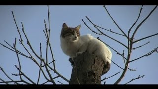 Cat Stuck in Tree, Tree Climbing Kitty, Istanbul Rescue, On the Top of a Tree.mp4