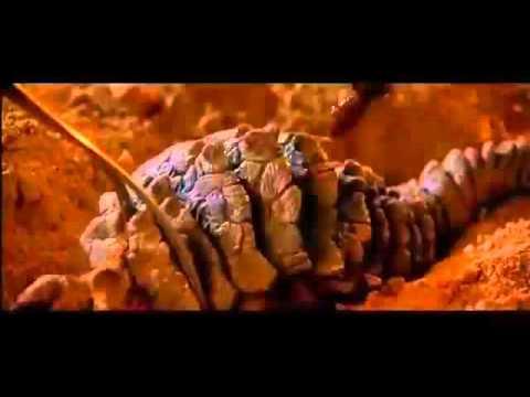 Ceti Alpha 5 Ear Borer Youtube