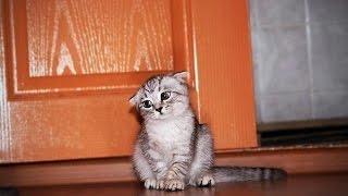 Видео с кошками приколы!Когда ругают кошек!
