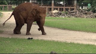 Adorable elephant attempt to play with a cat