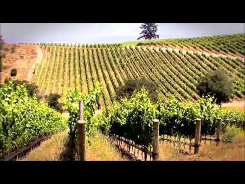 Grape Production Using Drip Irrigation
