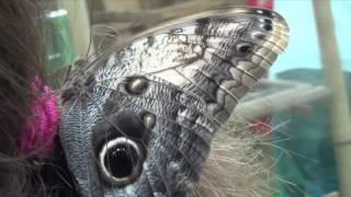 Тропические бабочки - чудо природы
