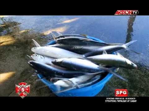 News5E | ISDANG KNIFE FISH NA NAGMULA AQUARIUM, SALOT SA MANGINGISDA? | RESCUE 5 | JULY 7, 2013