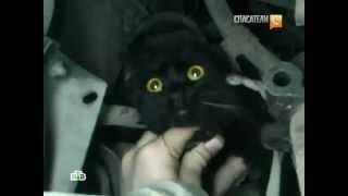 Кота спасли из-под капота машины