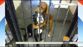 'Hugging' dogs saved from kill shelter are still up for adoption
