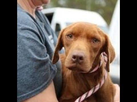 Animal charity: 60 dogs on Georgia property was 'heartbreaking scene'