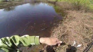Ловля плотвы и густеры  на полудонку с руки, видео rybachil.ru