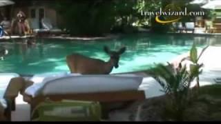 Little Palm Island Travel Video: Florida Keys