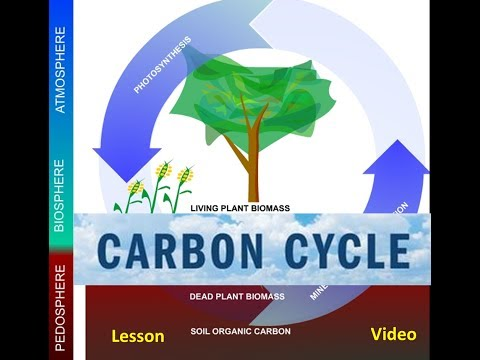 The Carbon Cycle & Global Warming Video -