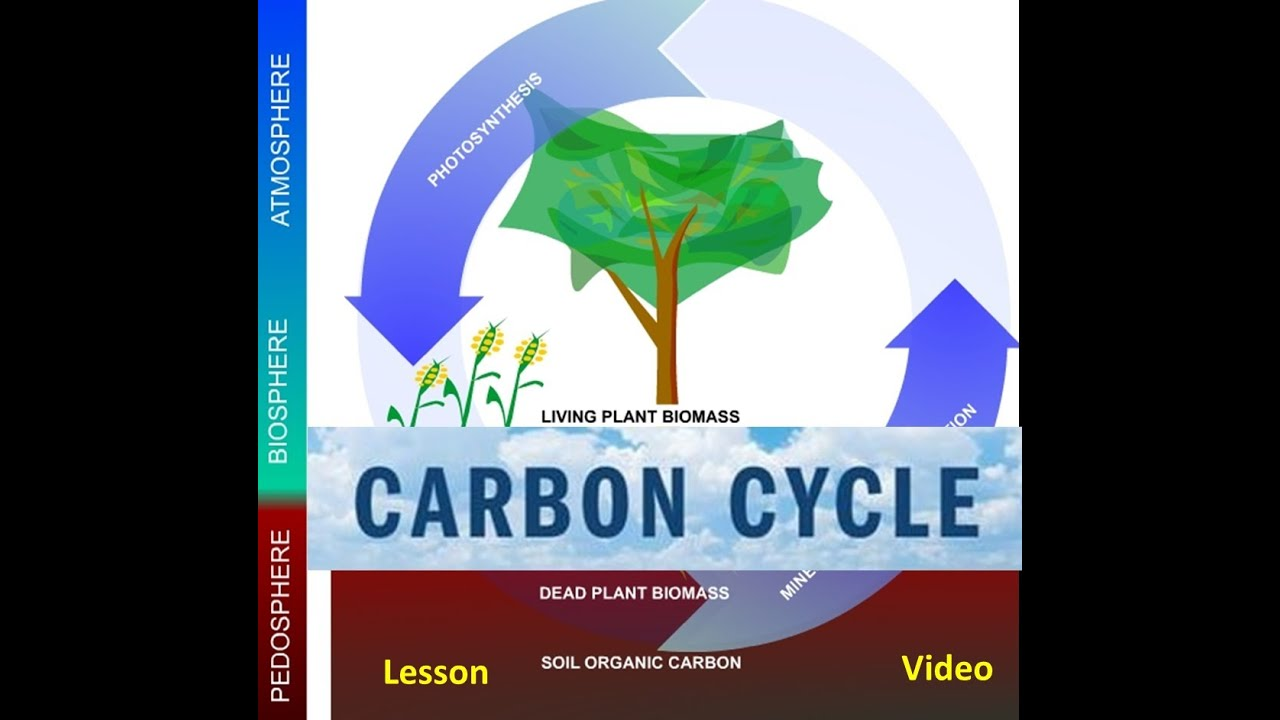 the carbon cycle amp global warming video youtube