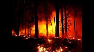 Мощной лесной пожар апокалипсис в Австралии
