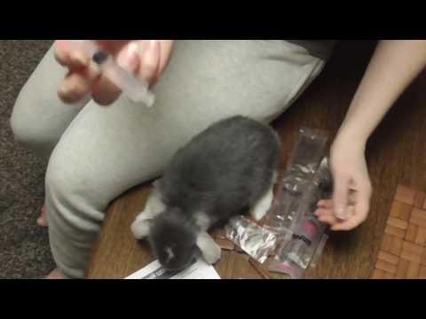 Как и чем лечить кролика при расстройстве пищеварения и вздутии живота, лекарства и витамины 🐰