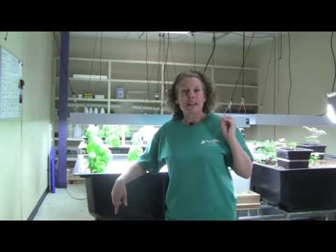 Aquaponics pH - Part 4 - How to lower your pH