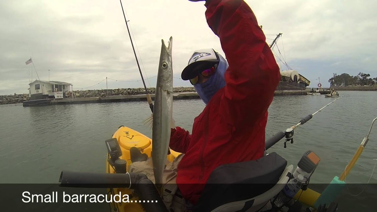 Kayak fishing at dana point ca may 24 2015 youtube for Fishing dana point