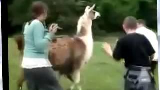 Как нас атакуют животные. Прикольно и порой не смешно.
