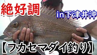 今回は、本当に久しぶりに岡山県の下津井沖へ「たい公望さん」から出撃してきました。水温低下が穏やかな今年は、マダイが年末からずっと釣...