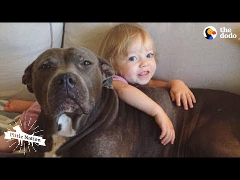 Senior Pittie And Her Human Siblings Are BFFs - NELLIE | The Dodo Pittie Nation