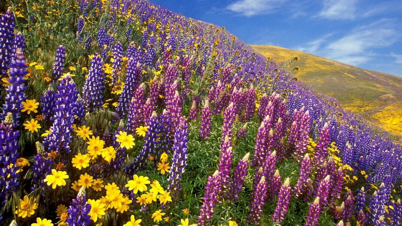 Как цветок полевой слова