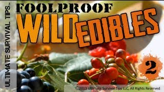 NEW! Foolproof Wild Edible Plants #2 - Easily ID Common Wild Plants that You Can Eat