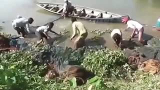মাছ ধরা   Catching fish in Bangladesh