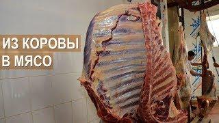 Из коровы в мясо. Бойня скота в хозяйстве Александра Тюрикова