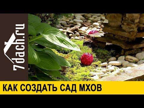 Мох в саду: зачем он нужен и как сделать сад мхов 7 дач