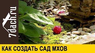 видео Мох на газоне или как вырастить мох на садовом участке