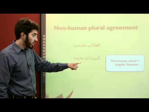 al-kitaab-2.2-|-non-human-plural-agreement