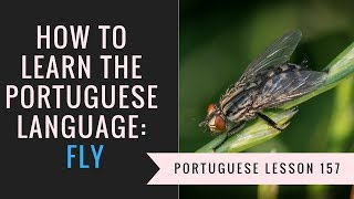 how to learn Portuguese (fly)