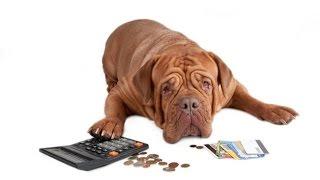 Налоги в Германии - Налог на собаку в Германии(Жизнь в Германии)