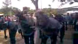 danza de los negritos de poza larga zapotal.3gp