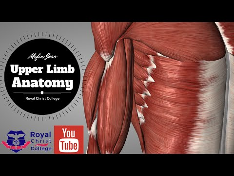 Upper Limb Muscle Anatomy | 3D Anatomy with Actions of muscles, Forearm muscles, muscles of hand