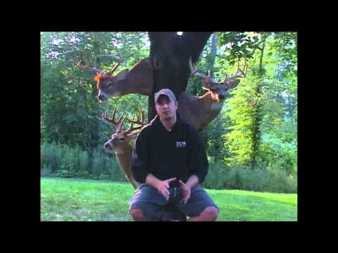 True Country Whitetails-Big Bucks and Birds in the Northeast