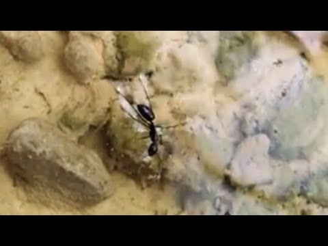 Watch How an 🐜 ant  swim | Slow Motion