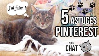 6 Astuces Pinterest Spécial Chats 🌙
