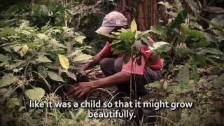 Coffee Farming in Nicaragua