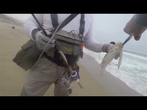 Catching Barred Surf Perch With Luzender Lures