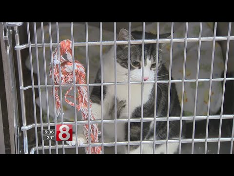 Shoreline towns hope to share an animal shelter