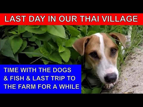 SADLY - LAST DAY IN OUR THAI VILLAGE FOR A WHILE Rural life Thailand Homestead THAI VLOG THAI VLOGG