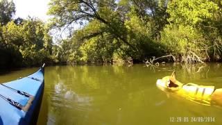 Dog kayaking in Dallas